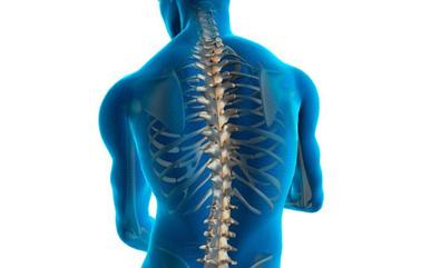spine333